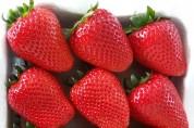 비타민C 풍부한 딸기 '비타베리' 개발